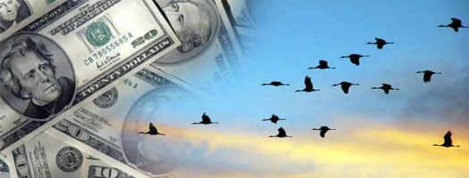 деньги как птицы