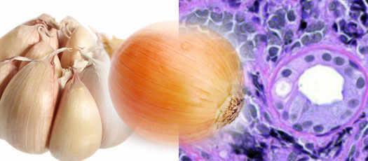 лук и чеснок против рака