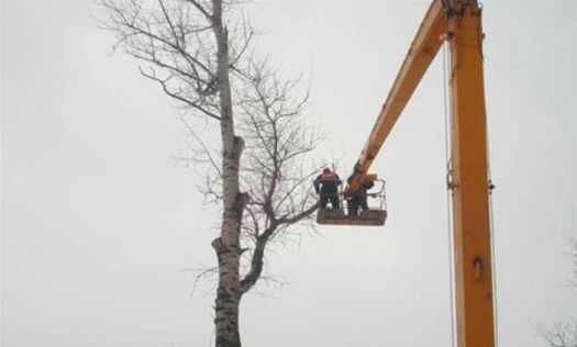 Спиливание деревьев с вышки