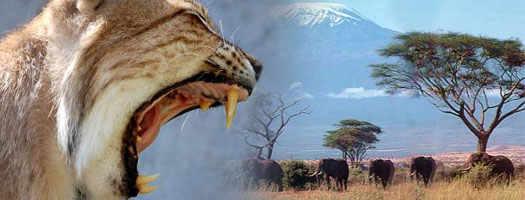 Не ходите в Африку гулять